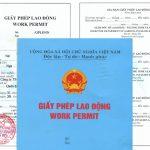 Cục việc làm cấp giấy phép lao động cho những tổ chức nào?
